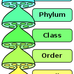 Domain, Kingdom, Phylum, Class, Order, Family, Genus, Species