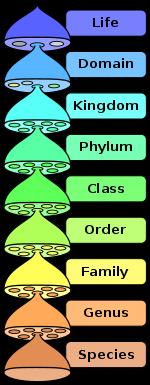 mnemonic-device-taxonomy